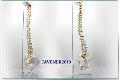 NEW1:1 Life Size Human Anatomical Anatomy Spine Medical Model +Stand Health Care крем life flo health с ретинолом a 1