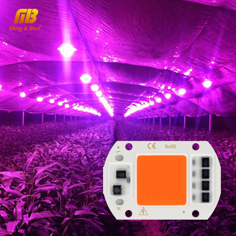 Led crescer espiga chip phyto lâmpada espectro completo ac220v 10 w 20 30 50 para plantas de interior plantio crescer e crescimento flor fitoamp