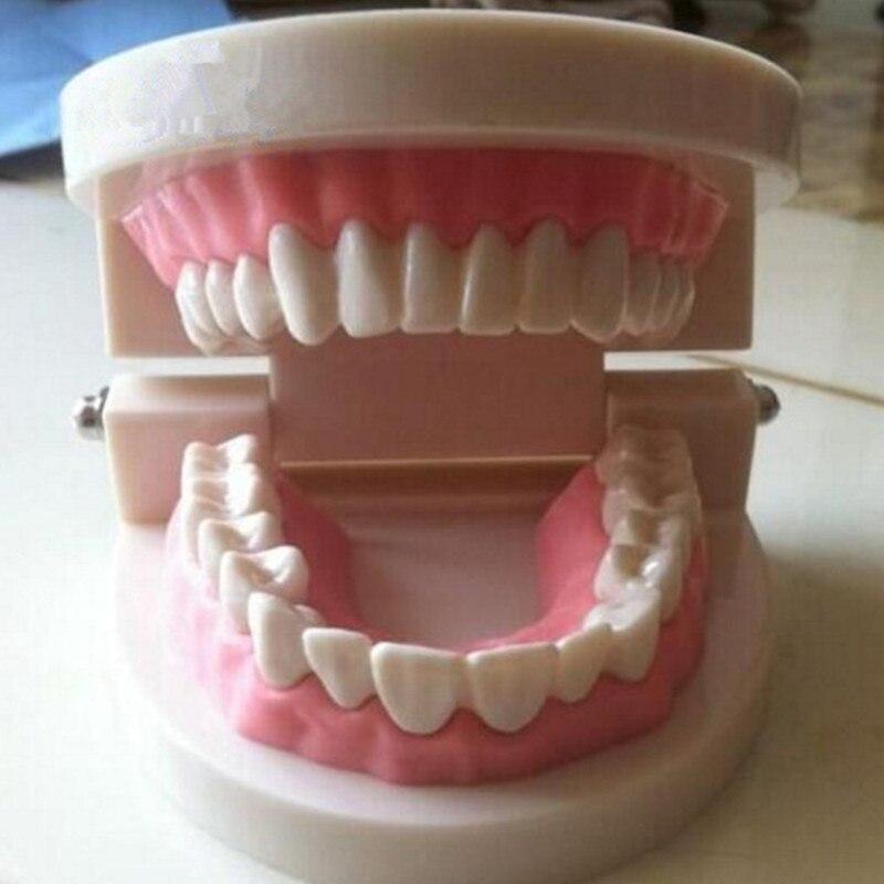 Vários modelos dentes dentários são usados para