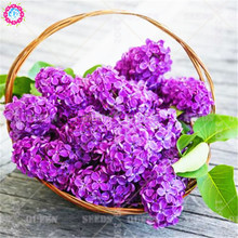 10pcs Mixed Bonsai Hydrangea Seeds Rare Climbing Colorful Flower Seeds Courtyard Blooming Plants for Home Garden Best packaging