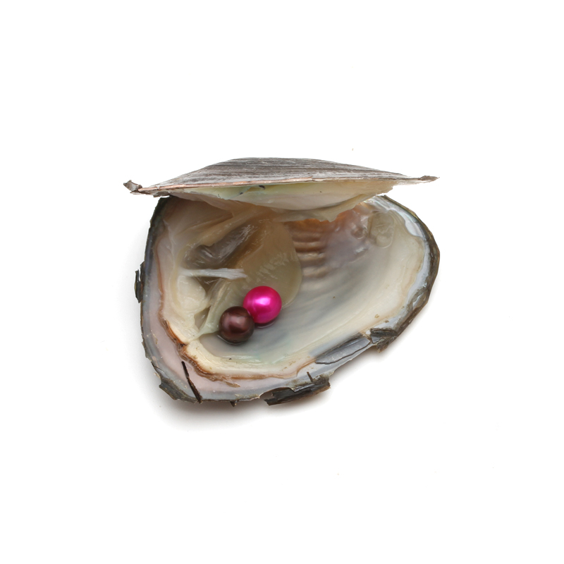 10 mix pearl color,100 pcs of round Akoya freshwater pearl oyster,wholesale oyster with pearl
