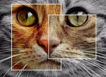 Hot colorful cat Diy 5D diamond painting cross stitch all diamond embroidery home decoration round drill animal series best gift