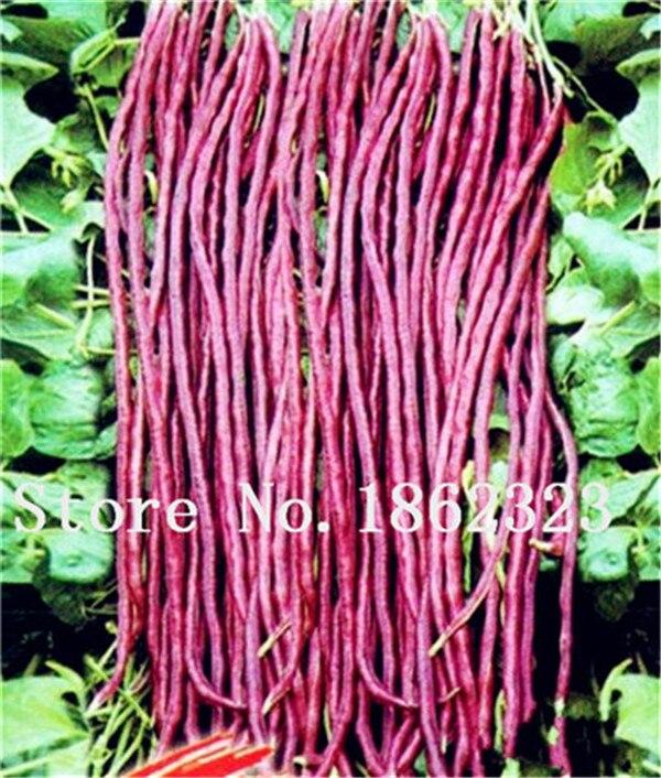 50 stk Kinesisk langbønne Vigna Unguiculata plante-bælg Vigny lækker slange bønne grøntsag have lang bønne frøPlanta