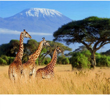 5D Diamond Embroidery Landscape Giraffe DIY Diamond Painting Diamond Mosaic Crafts Gifts Diamond Pattern Paintings(China)