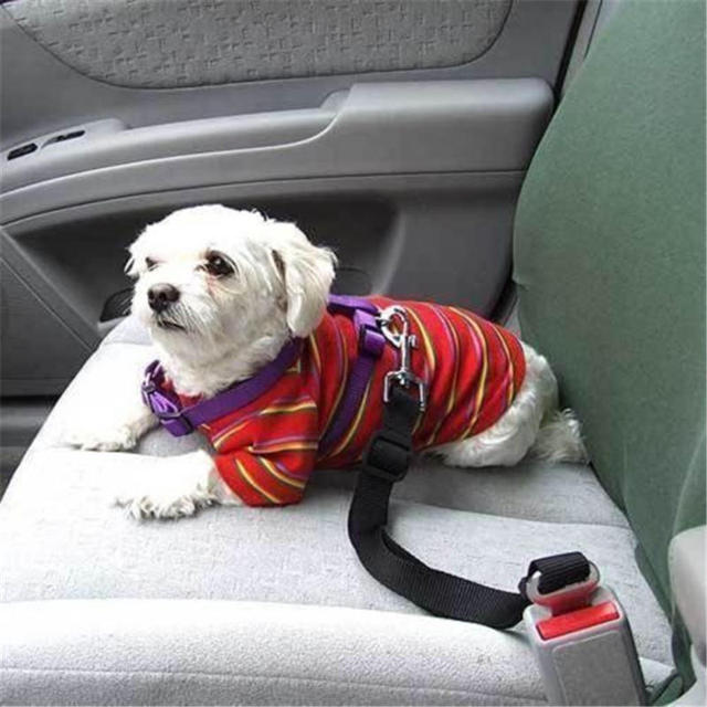 Regolabile Guinzaglio Per I Cani Auto Cintura di Sicurezza In Nylon Collari guin
