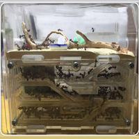 150mmx54mmx110mm Big DIY Moisture With Feeding Area Ant Nest ,Ant Farm Acrylic, Insect Ant Nests Villa PET For House Ants