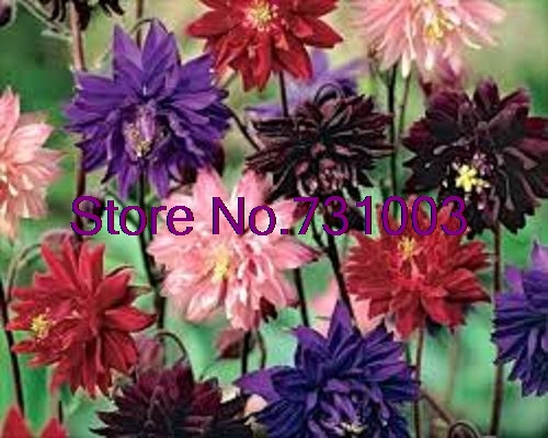 Tall Garden Flowers online get cheap tall garden flowers -aliexpress | alibaba group