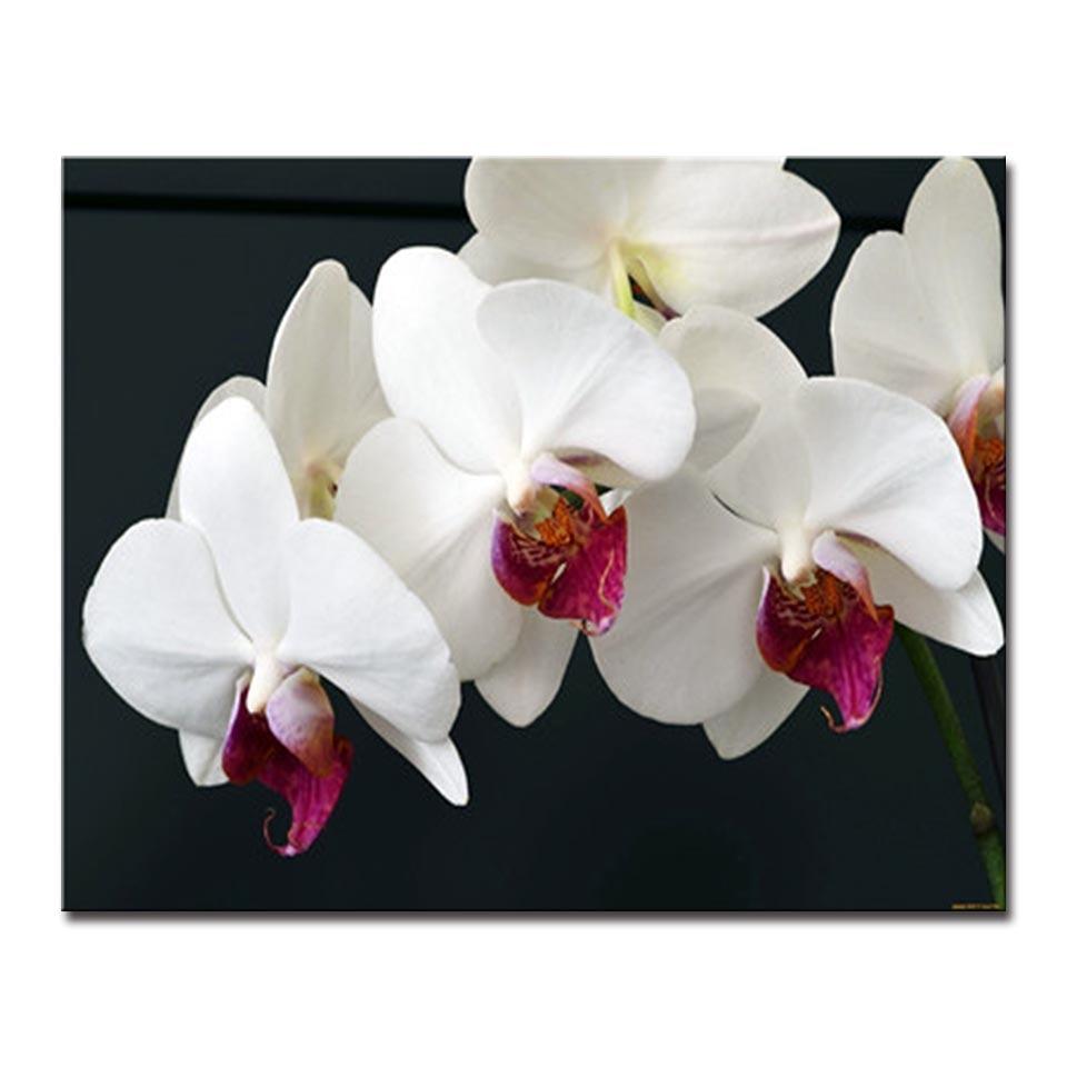 Pintura al óleo enmarcada por números DIY delicado blanco orquídea ...