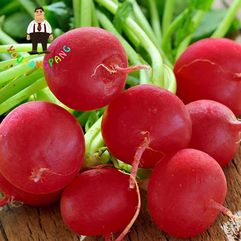 Bella ciliegia ravanello piante 100 pz di vendita piccola famiglia di ortaggi biologici giardino bambino
