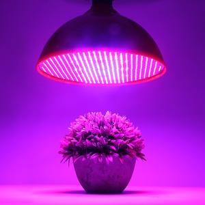 Image 5 - 80W E27 LED Grow Light 800Leds Plant Growth Lamp SMD3528 Red+Blue Led Bulb for Flower Seedlings Aquarium Indoor Plants AC85 265V