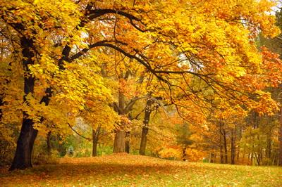 Unduh 910 Koleksi Background Hutan Kuning Gratis