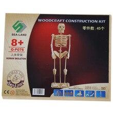 Homem Esqueleto Modelo 3D Puzzle Brinquedo De Madeira de Construção criança Montar Kit