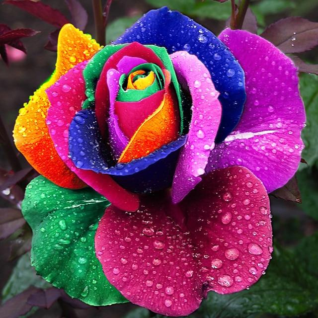 Resultado de imagem para flor rara