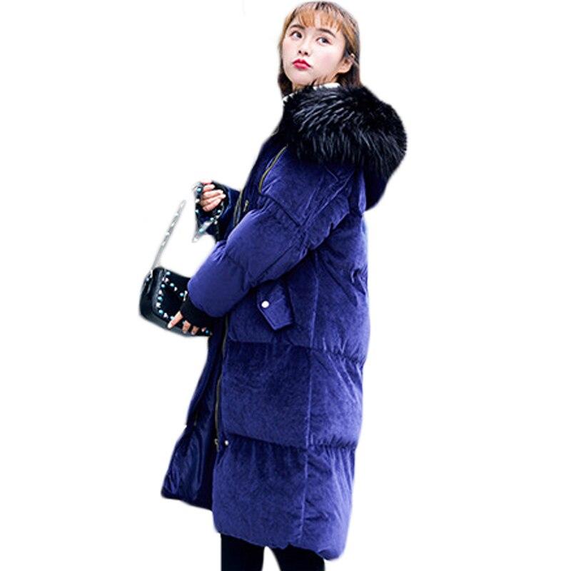 Mode Survêtement Sapphire Chaud Manteau Solide gris Brève Épais Femelle Xh708 Blue Coton À Confortable Manches D'hiver Longues Velours Jaqueta Femmes La De wvH7w