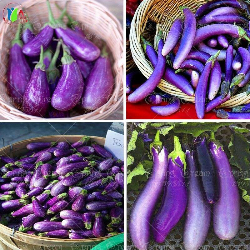 100 black purple long eggplant seeds,vegetable seeds free shipping ornamental-plant