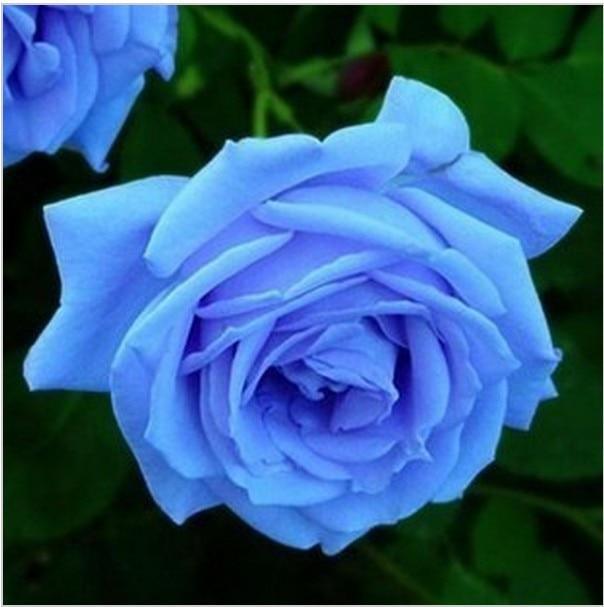 bleu rose-achetez des lots à petit prix bleu rose en provenance de