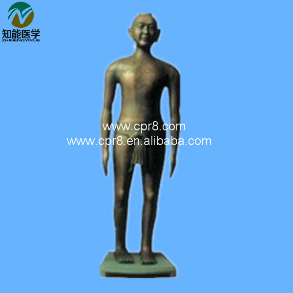 Chinese Acupuncture Model (Acupuncture Manikin) BIX-Y1001 WBW198 chinese acupuncture model  acupuncture