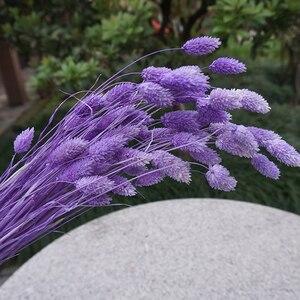 Image 4 - 1 Bunch (1 Bündel = 20 Pcs) natürliche Simulation Pflanzen Getrocknete Blumen Bouquets Für Home Dekoration Wohnzimmer Hochzeit
