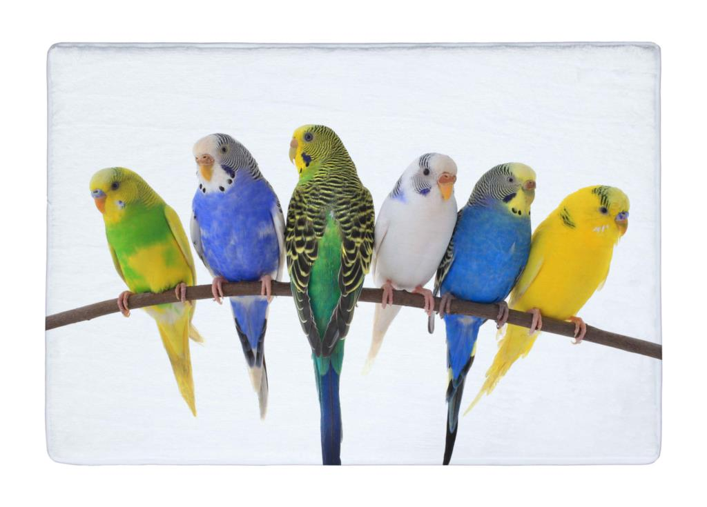 Floor Mat Simple Styel Parrots bird High Quality Print Non slip Rugs Carpets alfombra For font