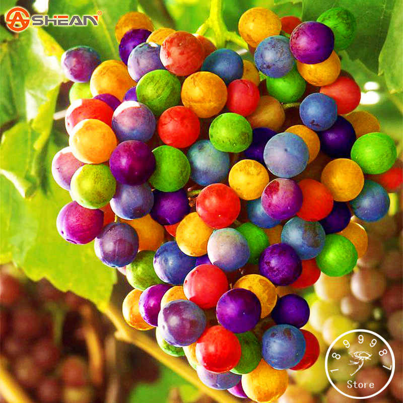 New Arrival!100 PCS/Bag Imported Rainbow Grape Bonsai Advanced Fruit Garden Natural Growth Grape Delicious Fruit Plants,#QYUY8V