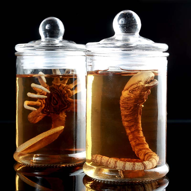 Mnotht Scene-Model Tank-Set Predator Alien Larva Face Culture 1/6-Solider Bug L30 SG001/SG002