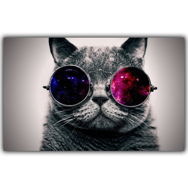 Hd Wallpapers Funny Cats Sunglasses