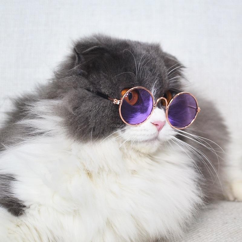 картинки с котята в очках джунгли отлично