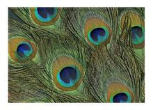 Floor Mat Colorful Green Peacock Gorgeous Feathers Print Non-slip Rugs Carpets For Indoor Outdoor Living Room