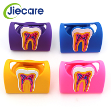 1 PC Hot Sale Cute Dental Name Card Holder Colorful Rubber Teeth Molar Shape Phone Card Name Storage For Clinic Dentist Gift New
