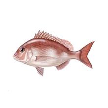 Fish Sticker Animal Marine Vinyl Fishing Boat Applique Funny Personality Accessories Decoration