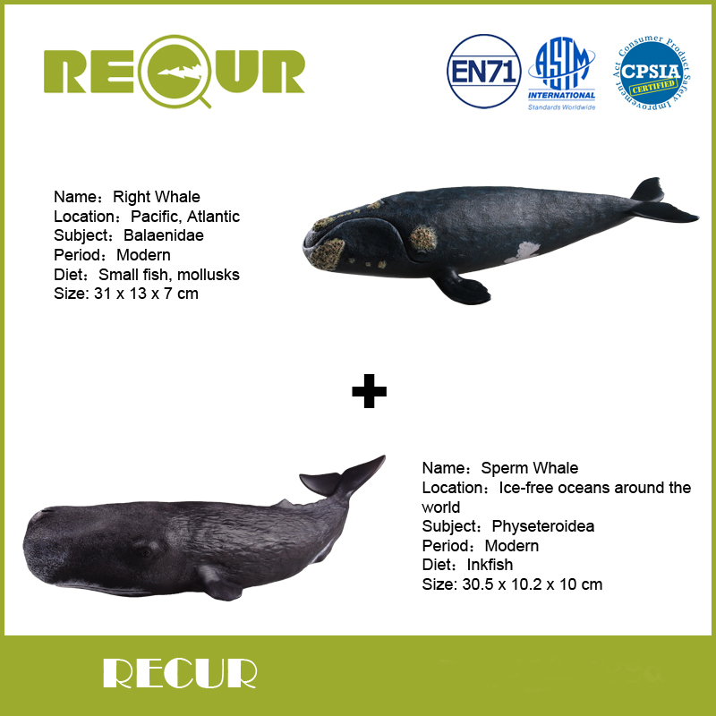 2 pcs/lot Recur Toy Sperm whale+Right whale Model Hand Painted PVC Action Figure Soft Marine Animal Toy Gift For Kid's Education