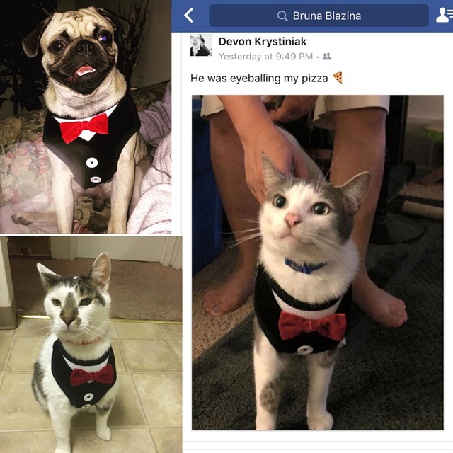 Cat Harness Vest with Leash Bowtie Gentleman Suit Tuxedo