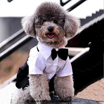 Tuxedo & Bow Tie Suit 1