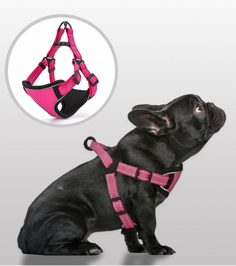 pequeno médio grande segurança do cão treinamento