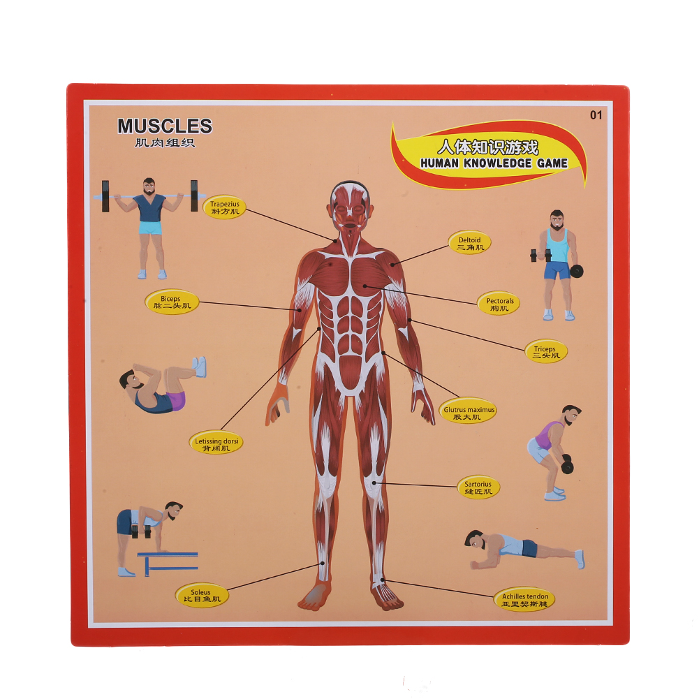Human Anatomy Intelligent Game Puzzle Kids Toys Children Gifts ...