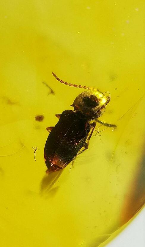 Cretaceous rare gold helm beetle Burmite Untreated Myanmar Amber insect 100 million year lynx stone men women jewelry accessory цена