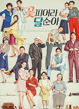 《花开了,达顺啊》2017年韩国电视剧在线观看