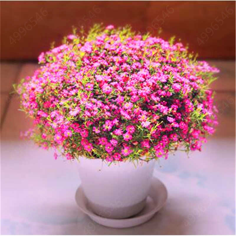 100 pcs bel cielo stellato, gypsophila bonsai, piante ornamentali, naturale, di cerimonia nuziale, camera da letto della famiglia, decorazione della casa fiori