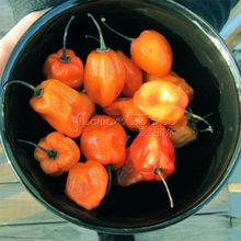 20 Peppers – Habanero Orange Hot Peppers Seeds~~healthful