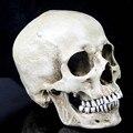 P-Chama Crânio Humano Resina Replica Modelo Médico Lifesize 1:1 do Dia Das Bruxas Decoração de Casa de Alta Qualidade Decorativa Artesanato Crânio