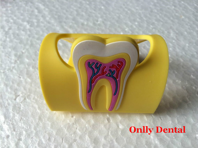 5pcs/pack Beautiful Business Card Holder Used In Dental Clinic Rubber Tooth Shape Cardcase