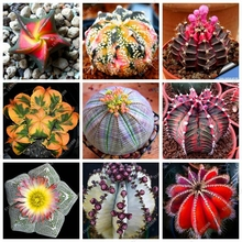 100pcs Mixed Set Mini Polygon Succulents Cactus Seeds