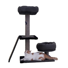 Funny Cat's Scratching Board