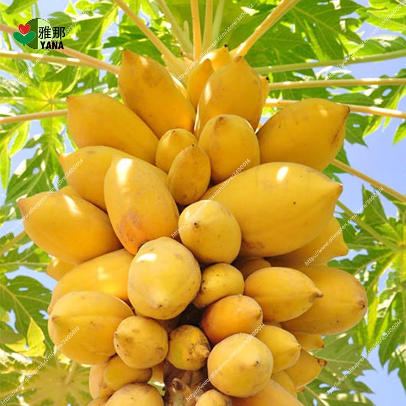 20pcs/bag papaya seeds Carica Rare dwarf organic sweet fruit edible