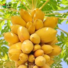20pcs/bag papaya seeds Carica papaya seeds Rare dwarf organic sweet papaya seeds fruit seeds edible