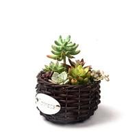 WHISM Handmade Wicker Storage Basket Flower Basket Woven Desktop Toy Artificial Green Plant Pot Wedding Room