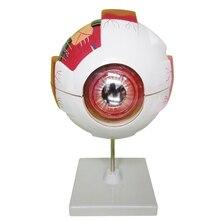 Анатомическая модель глаза естественные учебные инструменты и оборудование S-1603