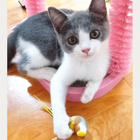 mpk-cat-toys-artificial-birds-with-magnets-cat-entertaining-toy