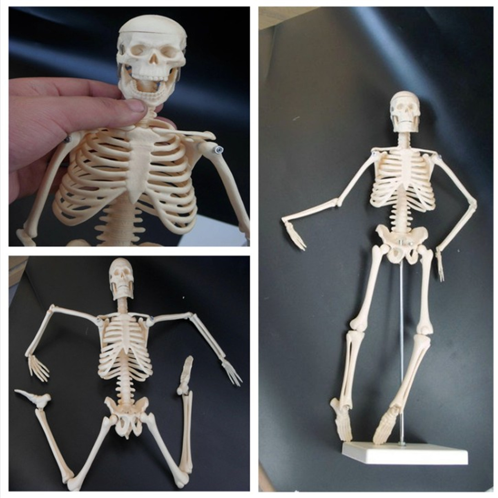 45CM Physique Mini Anatomical Skeleton Human Model Stand Poster Medical Learn Aid Anatomy