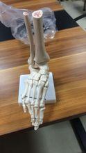 Foot Model (Life-Size Skeleton ) BIX-A1018 WBW360